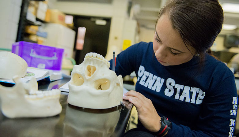 A student examines a skull in a Biology laboratory