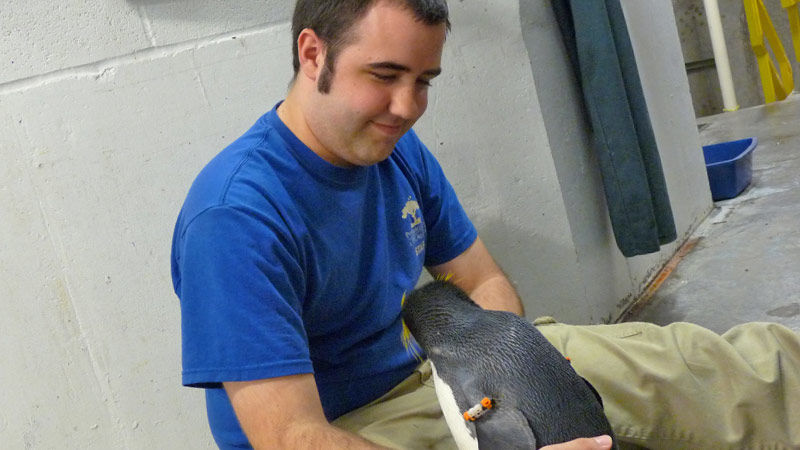 Brady Boyer sits on the ground and holds a penguin during his internship with the Pittsburgh Zoo.