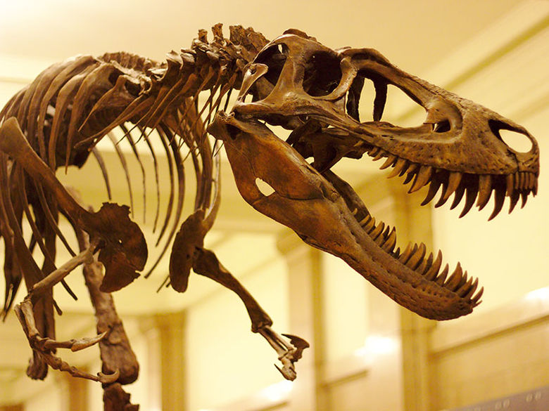 An assembled T-Rex at the Carnegie Museum of Natural Science