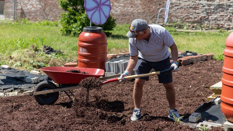Man shovels mulch into wheelbarrow